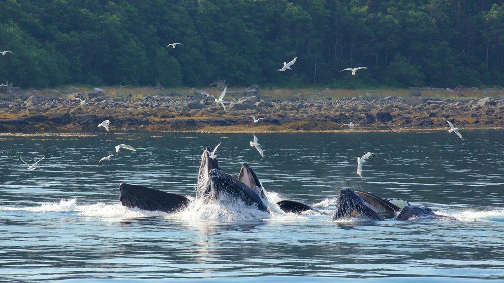 Funter Bay State Marine Park showing bird life, general coastal views and marine life