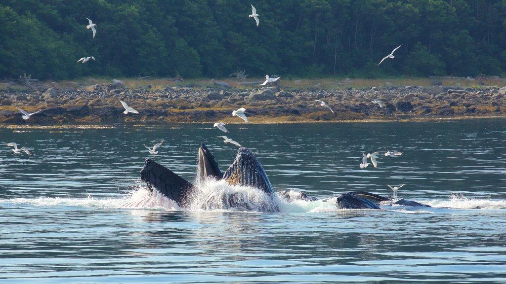 Funter Bay State Marine Park featuring bird life, marine life and general coastal views