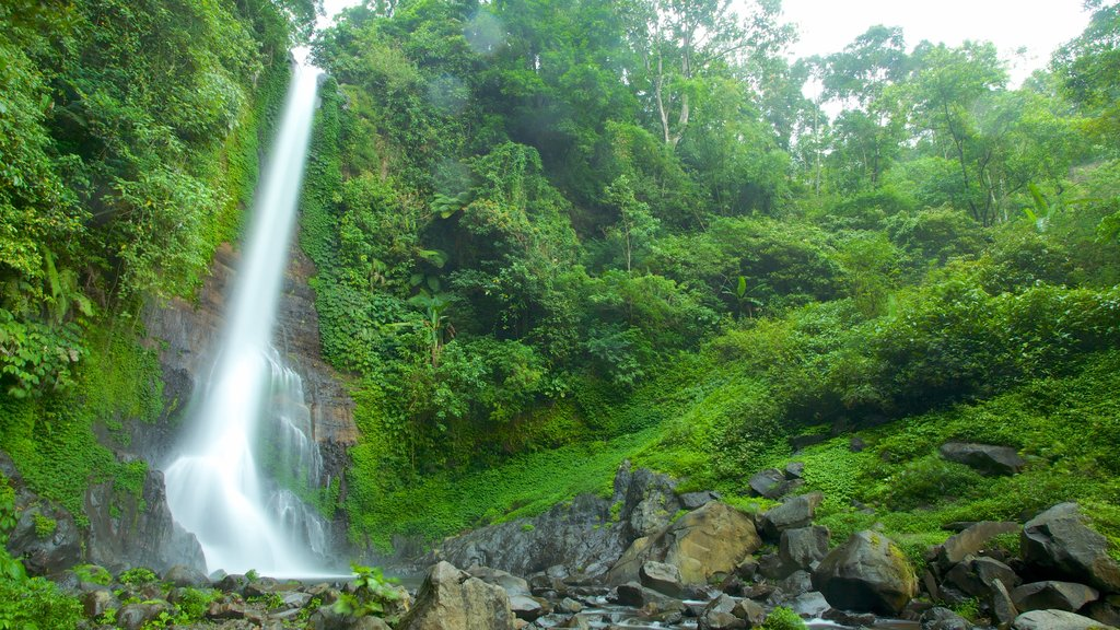 Gitgit Waterfall featuring a cascade and rainforest