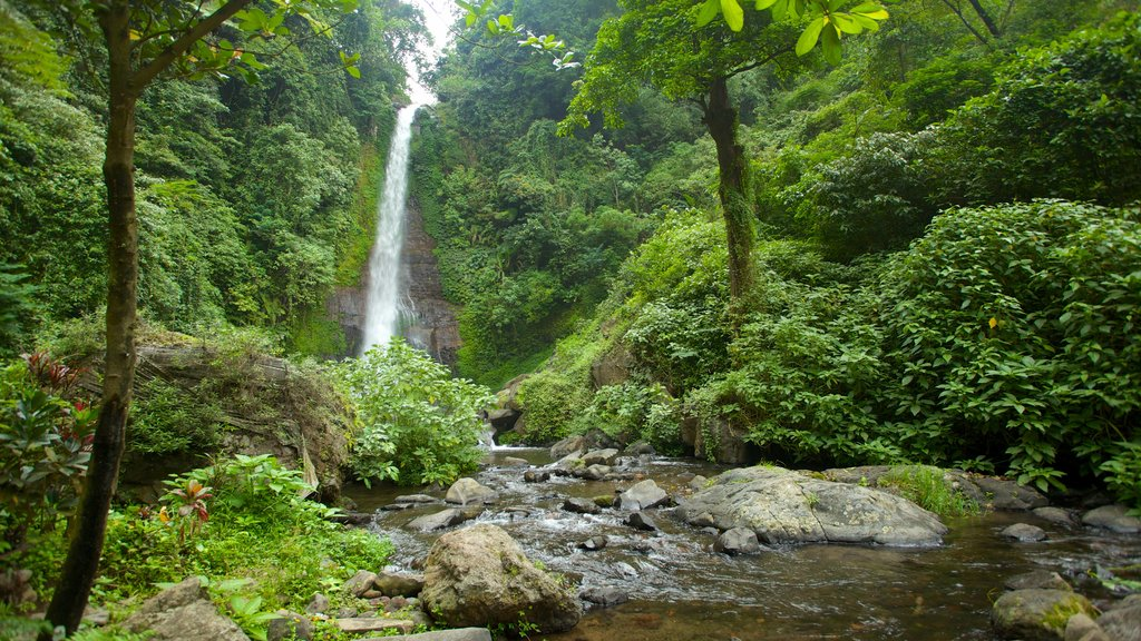 Gitgit Waterfall featuring landscape views, a river or creek and rainforest