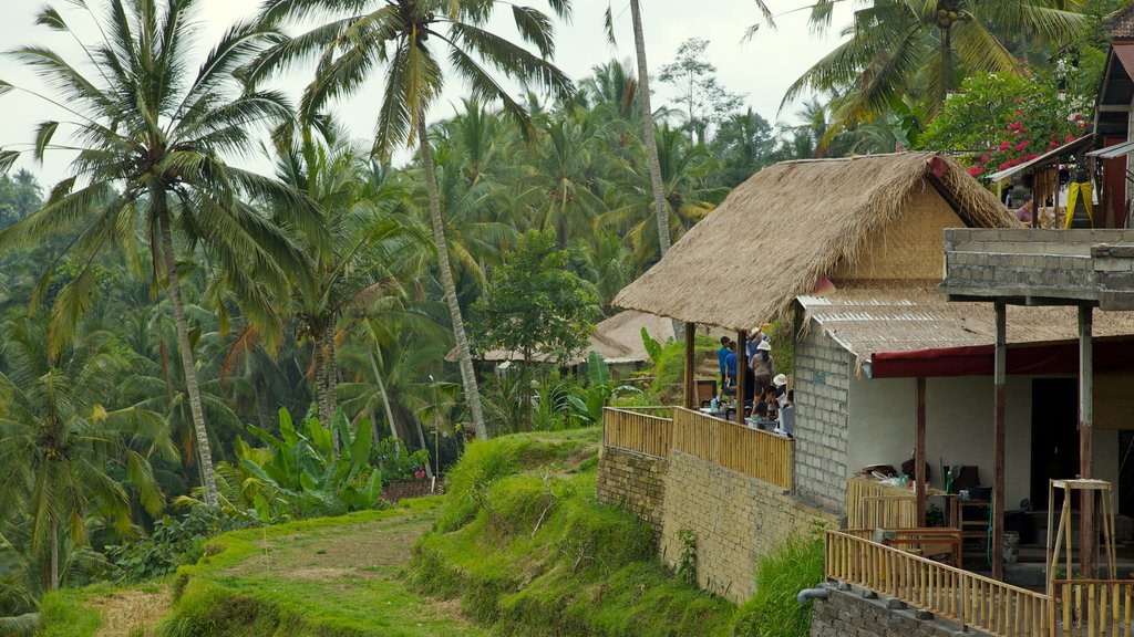 Tegallalang Village featuring tropical scenes and a small town or village