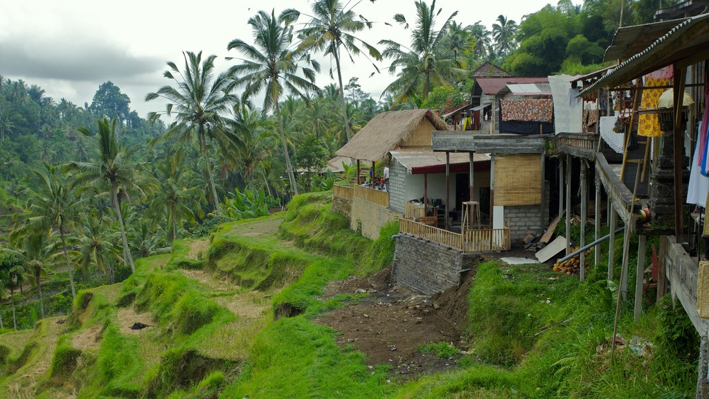 Tegallalang Village which includes a small town or village and tropical scenes