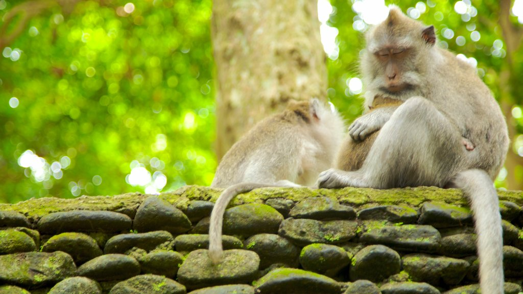 Ubud Monkey Forest featuring zoo animals and cuddly or friendly animals