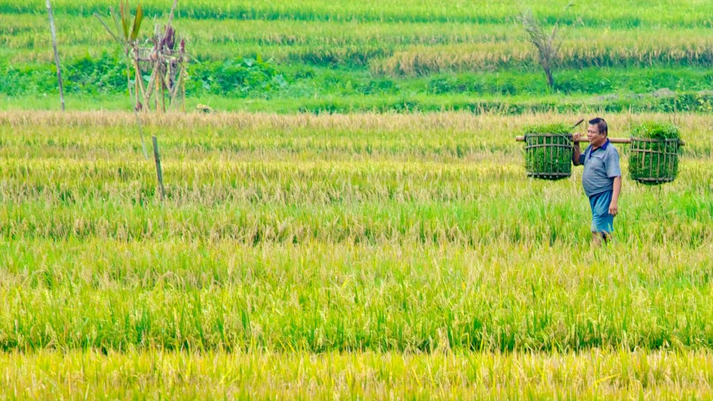 Bali which includes farmland as well as an individual male