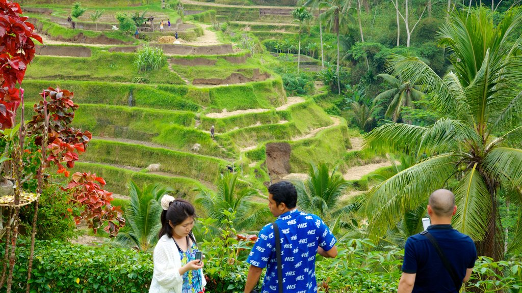 Bali showing farmland and a garden as well as a small group of people