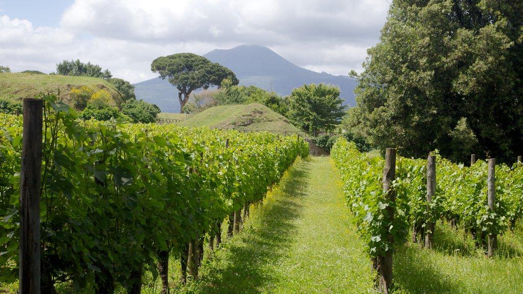 Pompeii which includes farmland