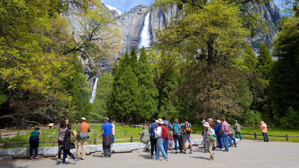 Lower Yosemite Falls showing a park, a cascade and mountains