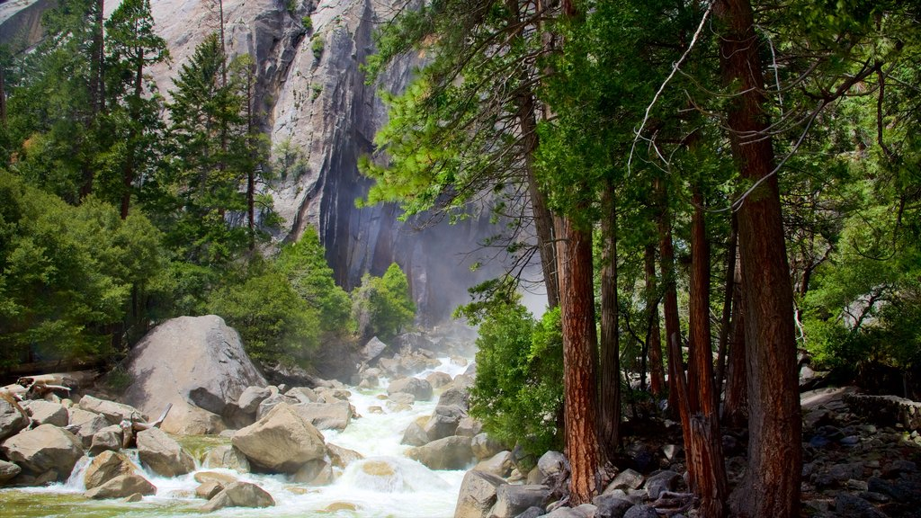 Lower Yosemite Falls featuring a river or creek and forest scenes