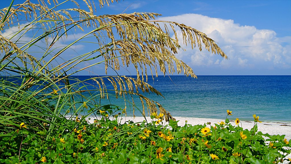 Sanibel Captiva Island which includes general coastal views and wildflowers