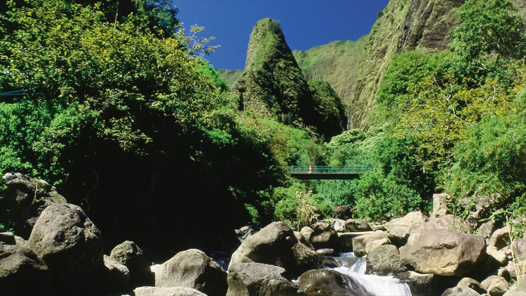 Iao Valley State Park featuring a bridge, a river or creek and forests