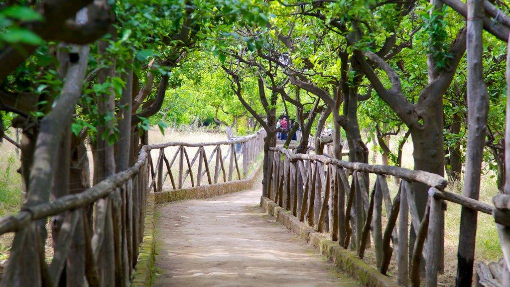 Costa de Sorrento ofreciendo un jardín y senderismo o caminata