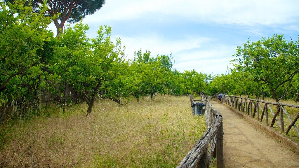 Sorrento featuring farmland