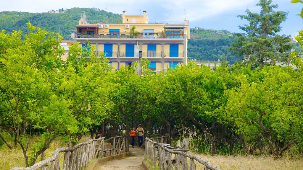 Sorrento showing farmland