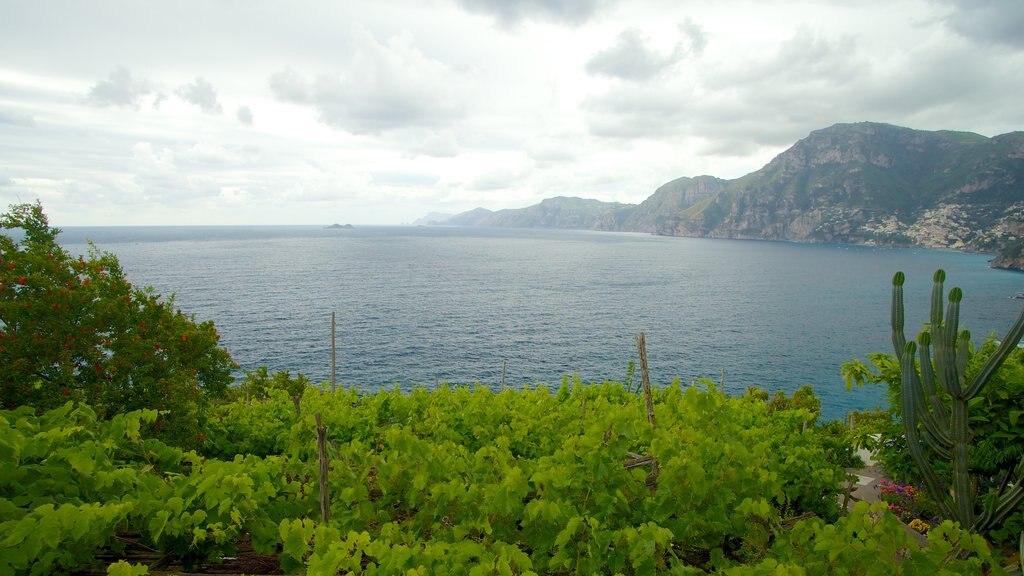 Praiano showing general coastal views