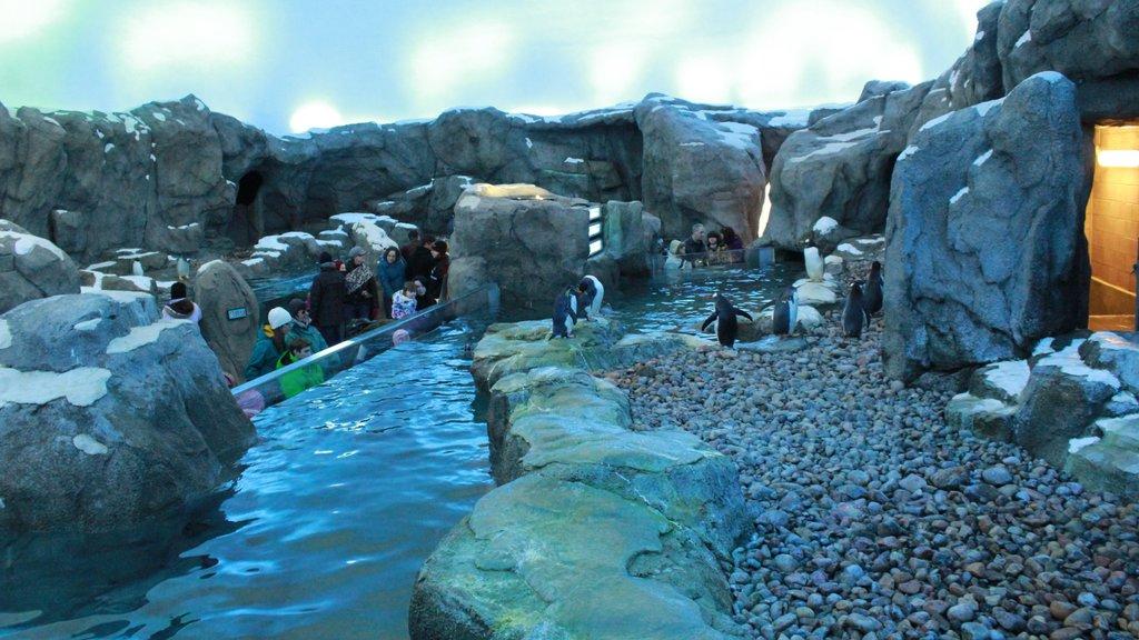 Calgary Zoo featuring bird life and zoo animals