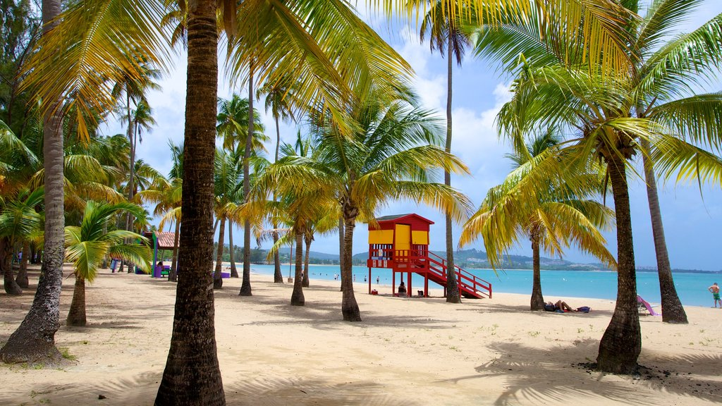 Luquillo Beach featuring a sandy beach and tropical scenes
