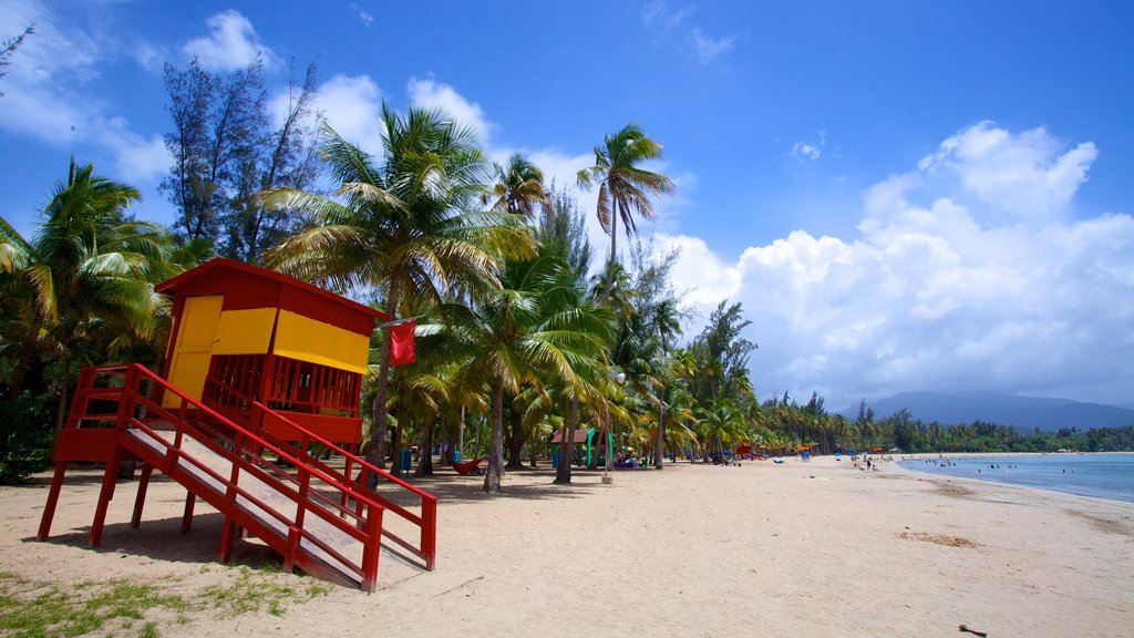 Luquillo Beach showing tropical scenes and a beach