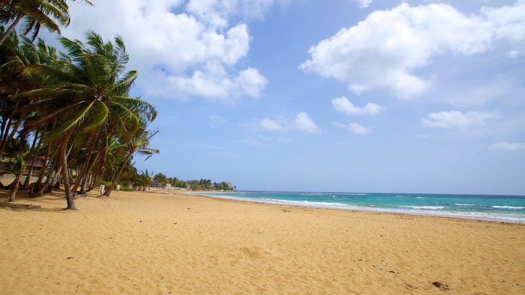 Azul Beach featuring a beach and tropical scenes