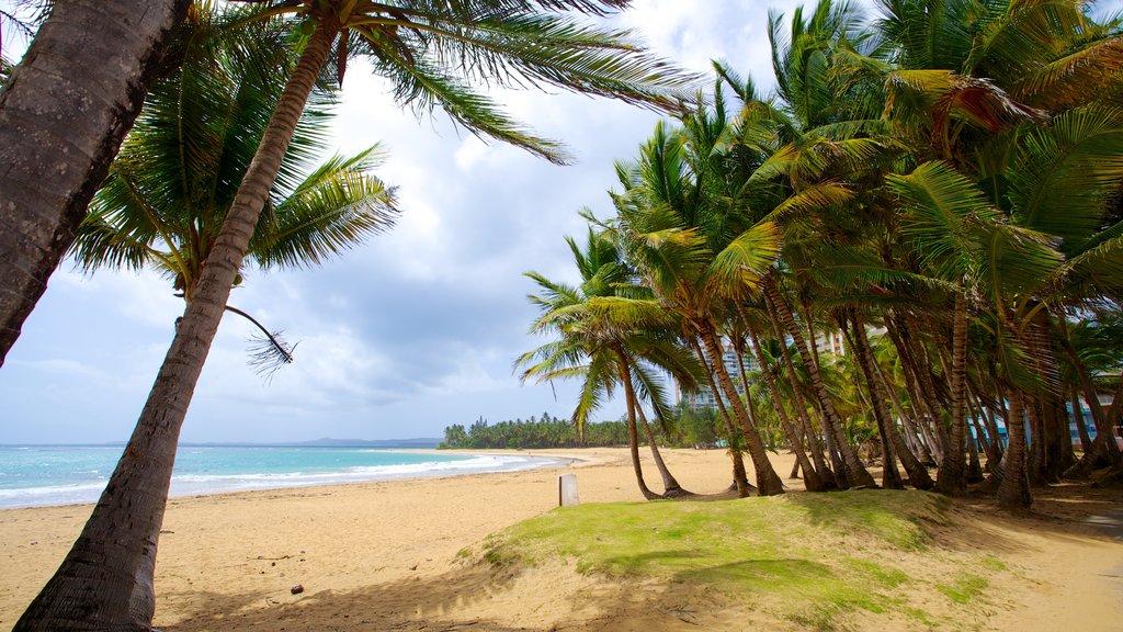 Azul Beach which includes a beach and tropical scenes
