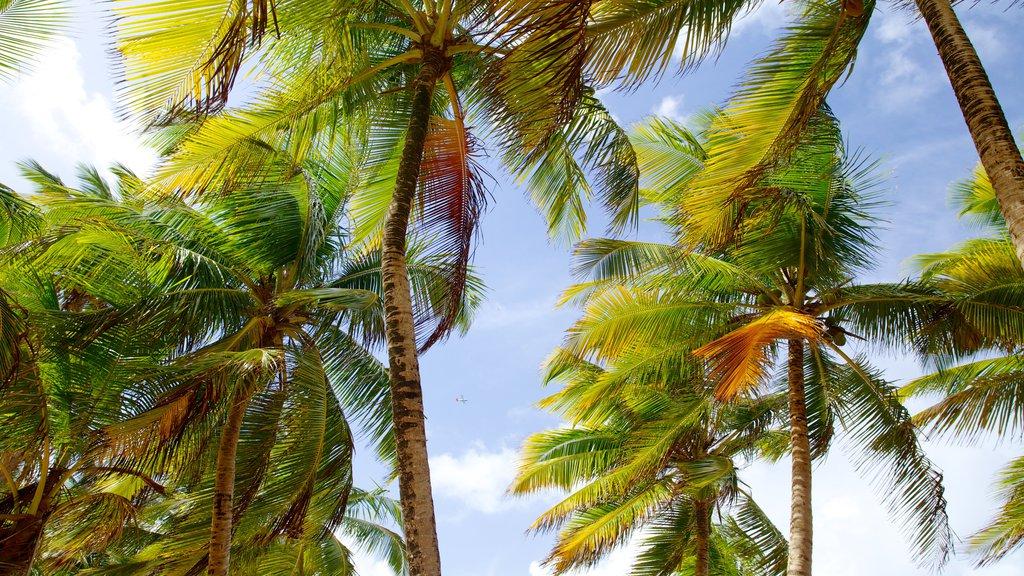 Azul Beach which includes tropical scenes