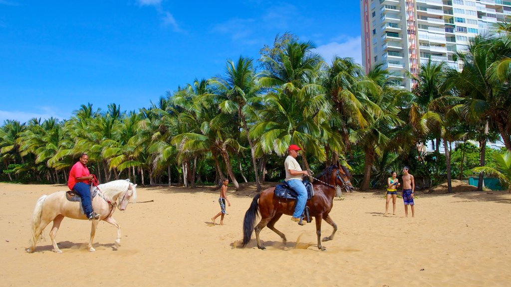 Azul Beach which includes land animals, a sandy beach and horseriding
