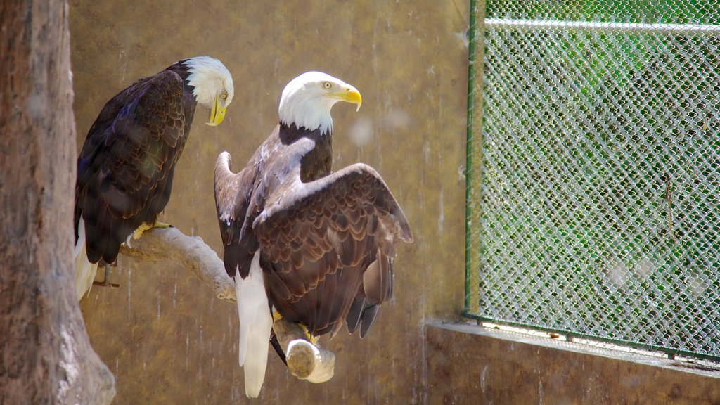 Mayaguez Zoo showing bird life and zoo animals
