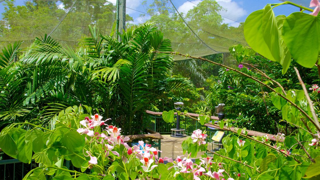 Mayaguez Zoo featuring wildflowers, zoo animals and flowers