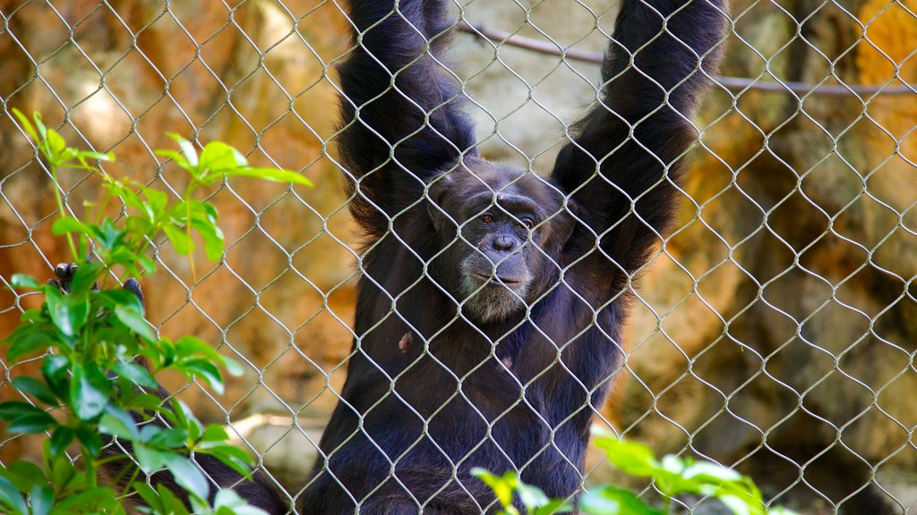 Mayaguez Zoo featuring zoo animals, animals and land animals