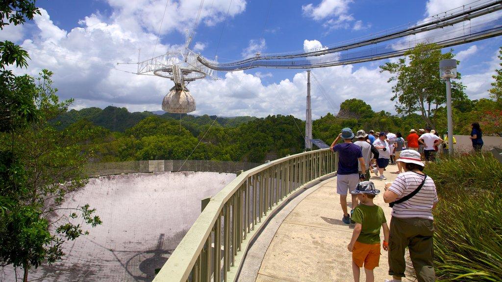 Observatorio de Arecibo ofreciendo un observatorio y un puente