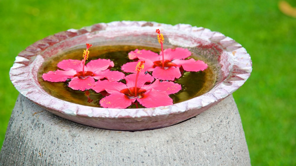 Gili Islands mostrando escenas tropicales y flores