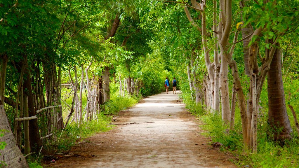 Gili Islands featuring hiking or walking and forests