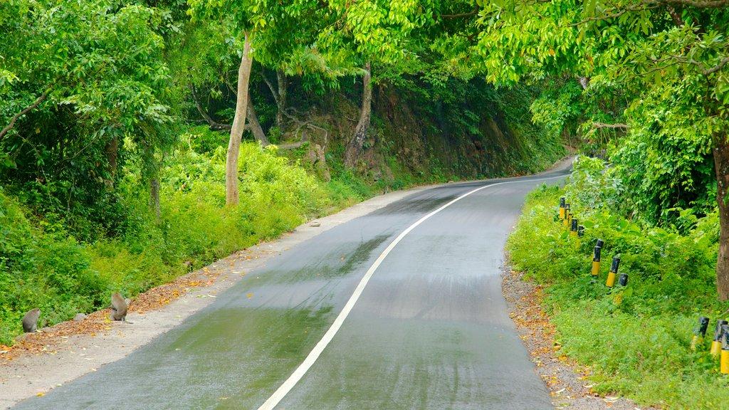Tetebatu Monkey Forest featuring tranquil scenes