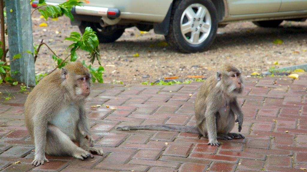 Tetebatu Monkey Forest featuring cuddly or friendly animals
