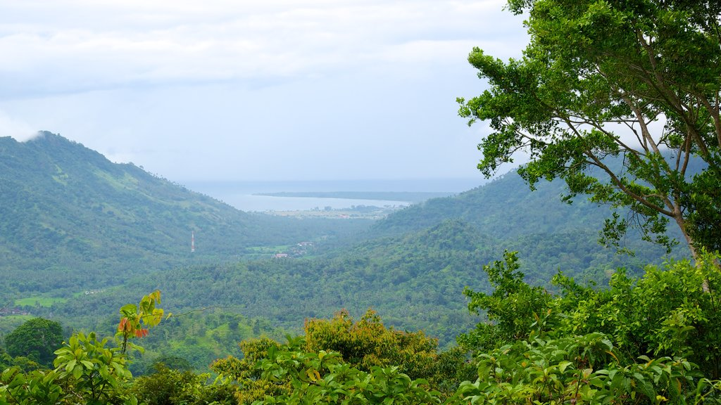 Lombok showing mountains and forest scenes