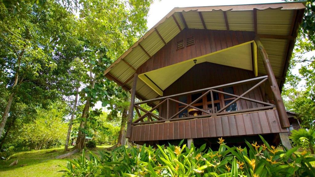 Sandakan showing a house
