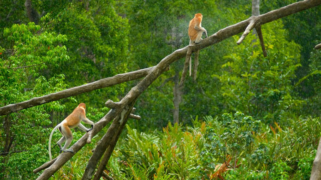 Labuk Bay Proboscis Monkey Sanctuary which includes animals, zoo animals and cuddly or friendly animals
