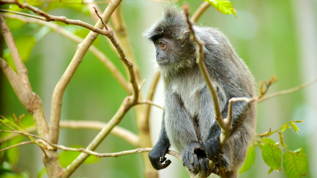 Labuk Bay Proboscis Monkey Sanctuary which includes zoo animals, animals and cuddly or friendly animals