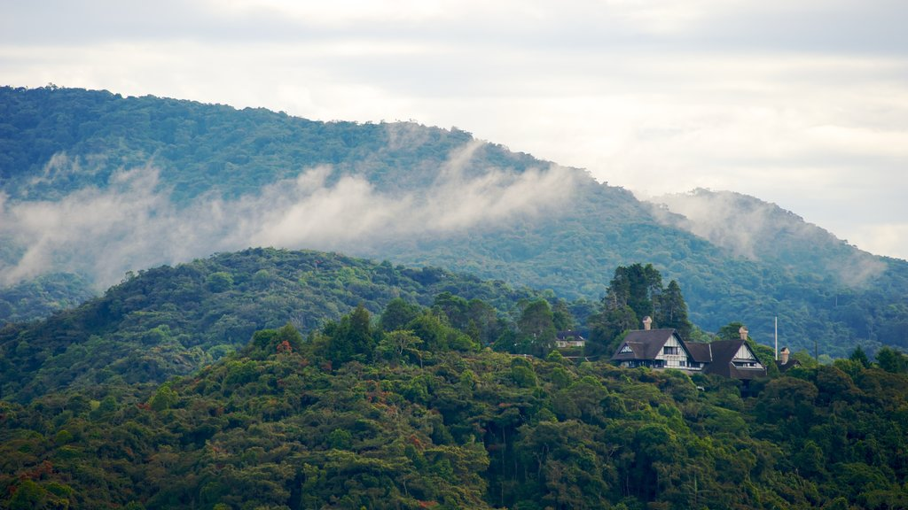 Cameron Highlands which includes mist or fog, mountains and forests