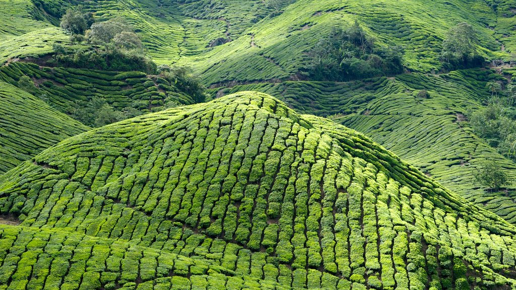 Cameron Highlands showing mountains and landscape views