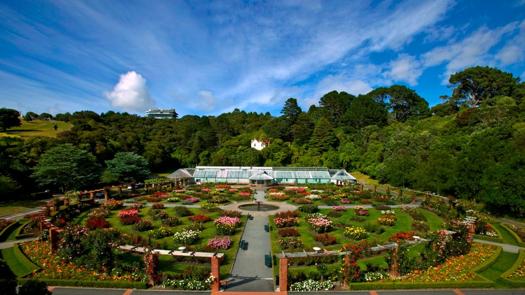 Wellington Botanic Garden featuring forests, flowers and a garden