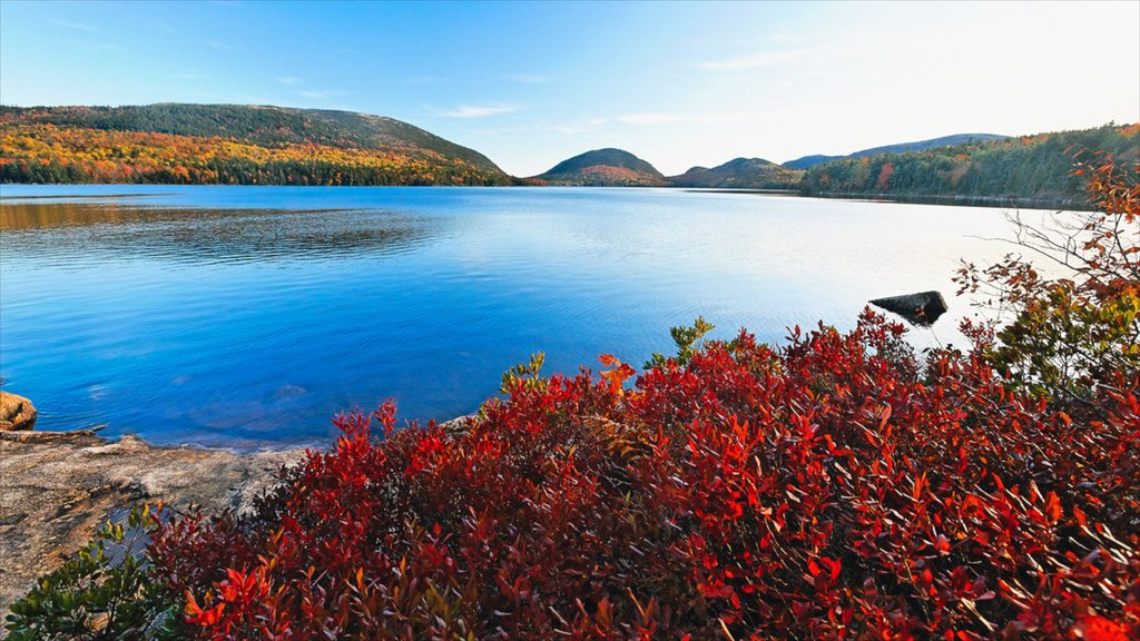 Bar Harbor showing landscape views, a bay or harbor and wildflowers