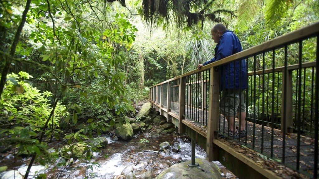 Hamilton which includes a river or creek, a bridge and forest scenes