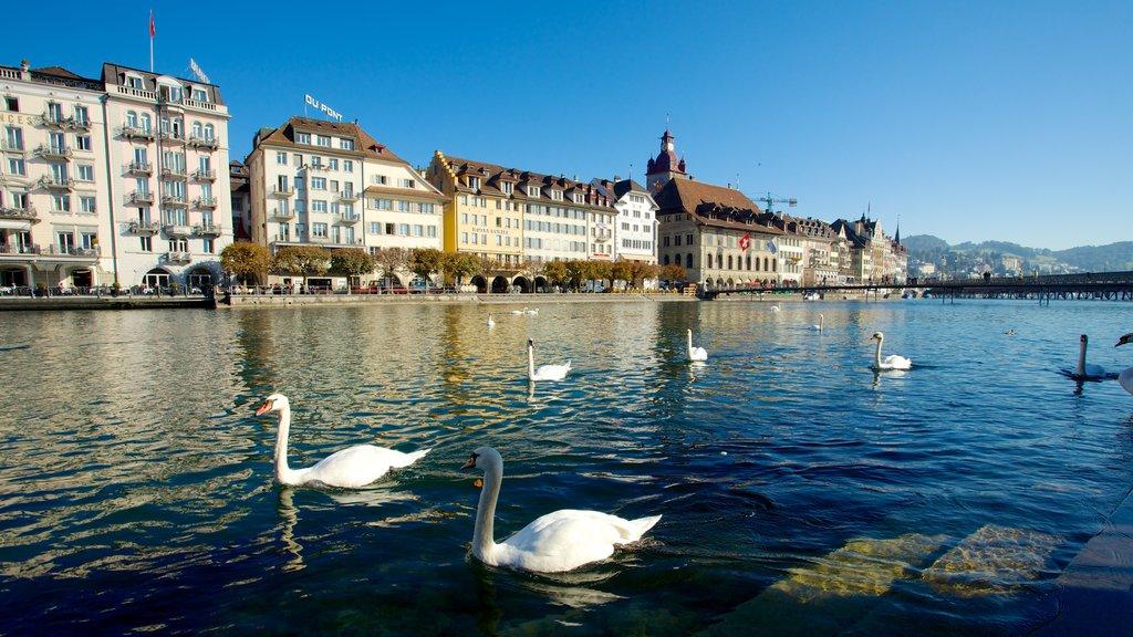 Casco antiguo de Lucerna ofreciendo un río o arroyo y vida de las aves
