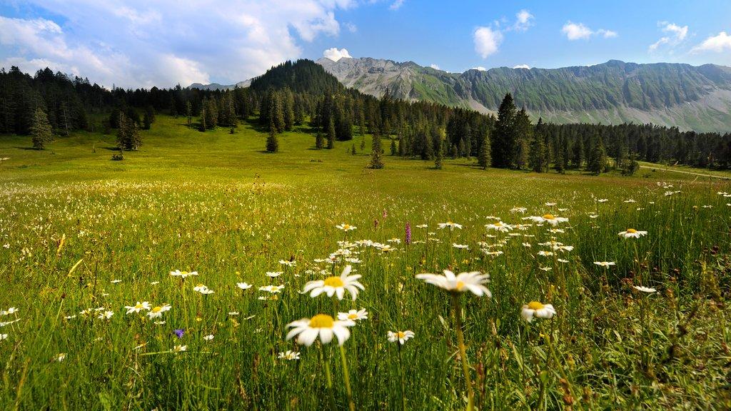 Lucerna ofreciendo escenas forestales, flores silvestres y montañas