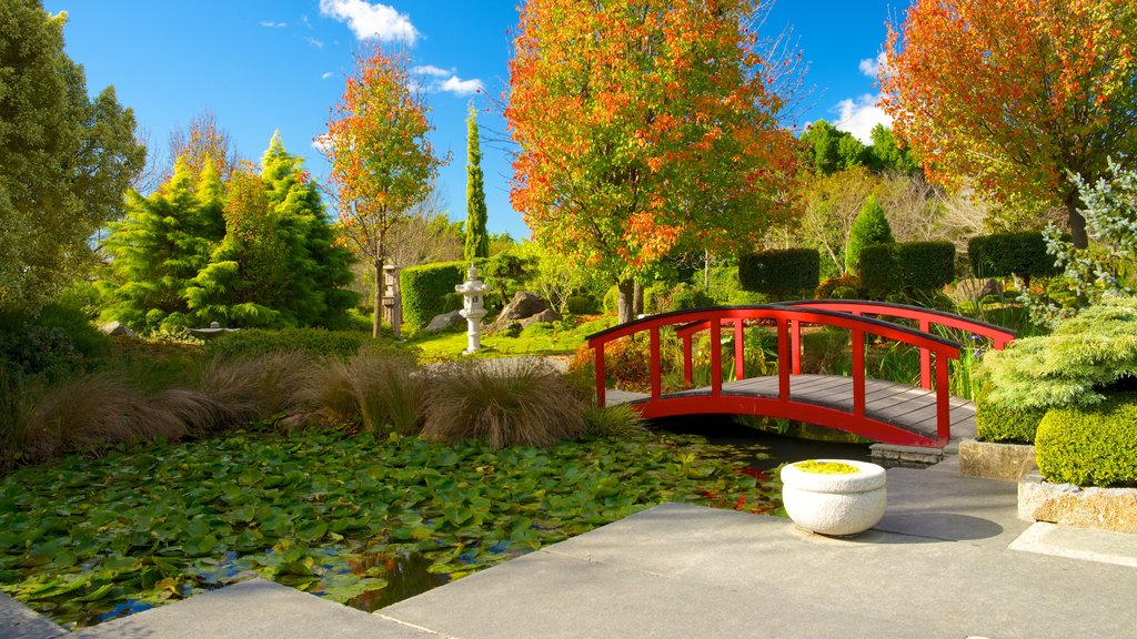 Hunter Valley Gardens showing a pond, a bridge and a park