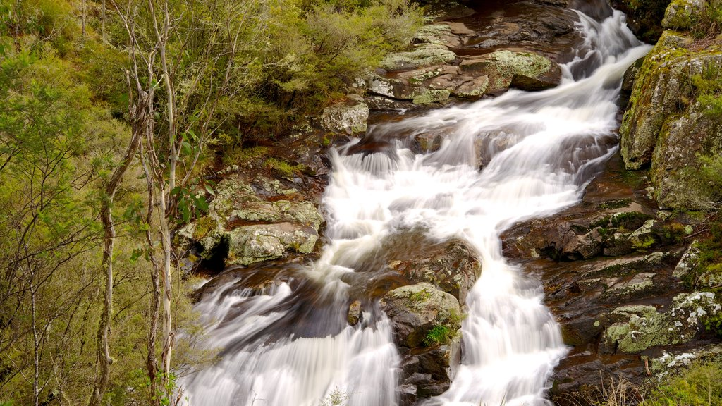 Barrington Tops National Park featuring forest scenes, rapids and a river or creek