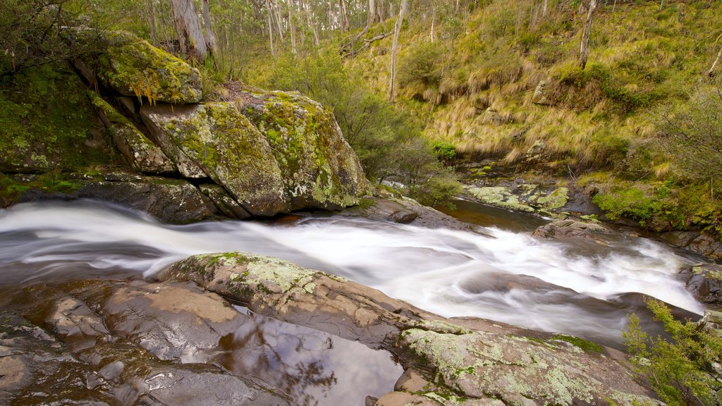Barrington Tops National Park showing a river or creek, forest scenes and tranquil scenes