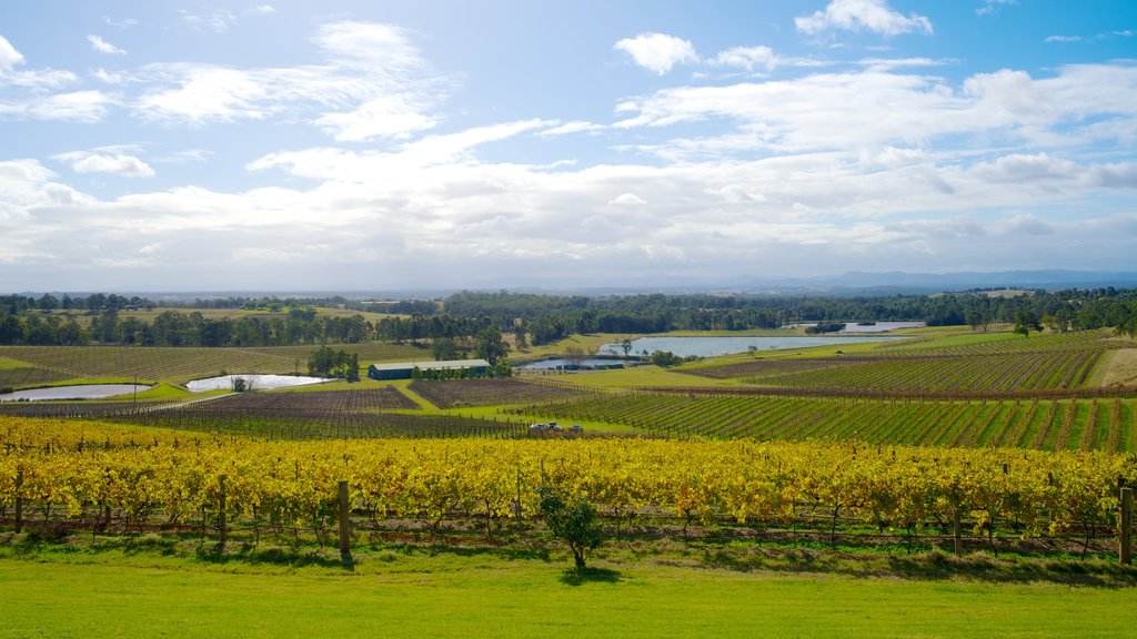 Audrey Wilkinson Vineyard showing landscape views and farmland
