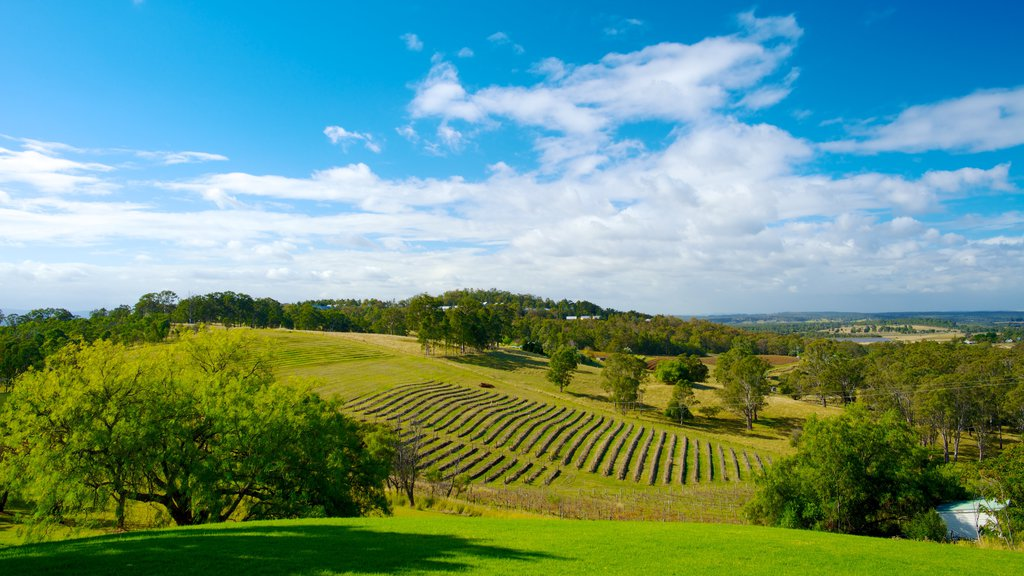 Audrey Wilkinson Vineyard featuring landscape views, farmland and tranquil scenes