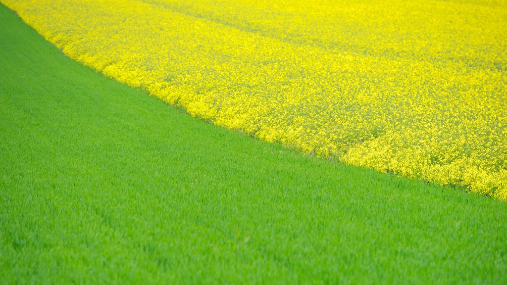 Villers-Bretonneux which includes farmland, tranquil scenes and flowers